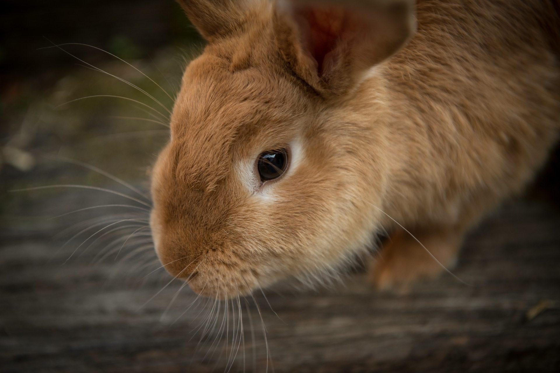 .NET Core + RabbitMQ = RawRabbit